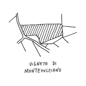 Montepulciano-vigneto