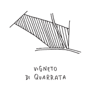 Quarrata-vigneto