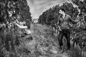 Vineyards in La Morra, Barolo